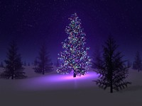 Beautiful christmas tree (tomasha.com)
